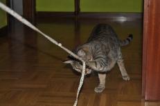 Bastet y la cuerda