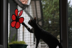 investigar mediante todos los sentidos es vital para los gatos.