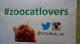 #zoocatlovers